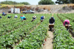An Examination of Wage and Income Inequality within the American Farmworker Community